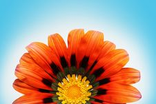 Free Beautiful Red Flower Stock Images - 1313024