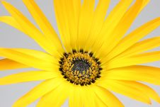 Free Beautiful Flower Stock Photography - 1313052
