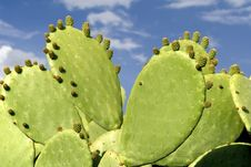 Free Cactus Stock Photography - 1313612