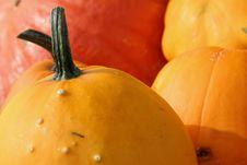 Colorful Pumpkins 2 Stock Photo