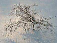 Free Frozen Tree Royalty Free Stock Photos - 1314618