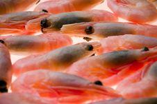 Free Small Shrimp Royalty Free Stock Photography - 1316917