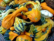 Free Bunch Of Pumpkins Royalty Free Stock Photography - 1317707