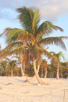 Free Criss-Crossed Palms Royalty Free Stock Photo - 1317925