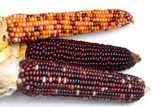 Free Indian Corn2 Stock Photography - 1318362