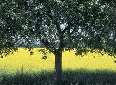 Free Meadow Stock Photos - 1318563