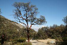 Free Tree In The Mountain Royalty Free Stock Photos - 1319008
