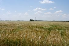 Free Grain Field Royalty Free Stock Image - 1319016