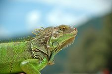 Free Green Animal Royalty Free Stock Images - 1319739