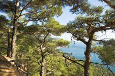 Free Sea Coast Royalty Free Stock Photo - 1319815