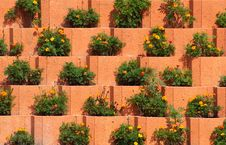 Free Flower Bed Royalty Free Stock Photography - 1319847