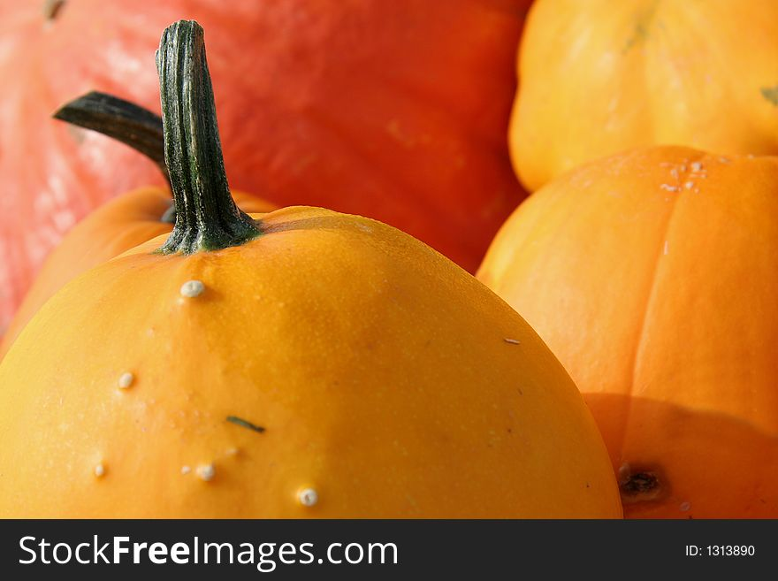 Colorful pumpkins 2