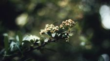 Free Selective Focus Photo Of Flower Buds Stock Images - 131017114