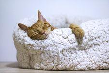 Free Orange Cat Sleeping On White Bed Royalty Free Stock Photography - 131017207