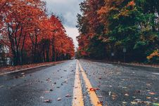 Free Concrete Road Between Trees Royalty Free Stock Image - 131017306