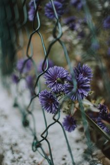 Free Purple Flowers On Green Chain Link Fence Stock Photos - 131017313