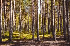 Free Photo Of Tree Trunks During Daytime Royalty Free Stock Photography - 131017447