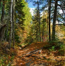 Free Ecosystem, Nature, Path, Temperate Broadleaf And Mixed Forest Stock Photography - 131082042