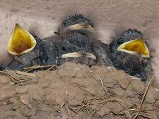 Free Bird, Beak, Fauna, Bird Nest Royalty Free Stock Image - 131082126