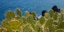 Free Vegetation, Plant, Cactus, Sky Royalty Free Stock Photo - 131082175
