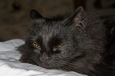 Free Cat, Black Cat, Whiskers, Black Royalty Free Stock Photo - 131082185