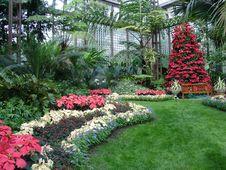 Free Plant, Garden, Botanical Garden, Flower Royalty Free Stock Image - 131082206