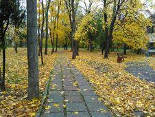 Free Leaf, Yellow, Autumn, Tree Stock Photo - 131082390
