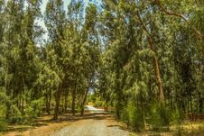 Free Tree, Vegetation, Ecosystem, Path Stock Photo - 131082480