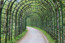 Free Leaf, Tree, Biome, Plant Royalty Free Stock Photos - 131082718