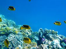 Free Coral Reef, Ecosystem, Coral Reef Fish, Underwater Stock Photos - 131082863