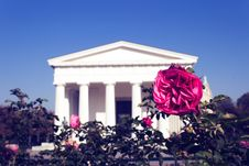 Free Photo Of Red Rose With White Concrete Building In The Background Royalty Free Stock Images - 131109169