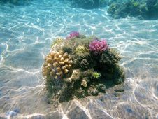 Free Coral Reef, Sea, Reef, Water Royalty Free Stock Photography - 131164967