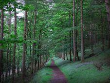 Free Forest, Woodland, Nature, Ecosystem Royalty Free Stock Image - 131165166