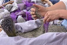 Free Purple, Lavender, Flower Stock Photography - 131165282
