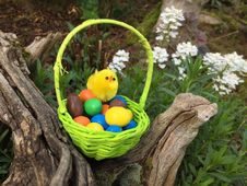 Free Easter, Grass, Easter Egg, Bird Royalty Free Stock Image - 131165466