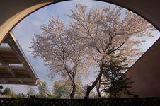 Free Tree, Sky, Plant, Woody Plant Stock Image - 131165611
