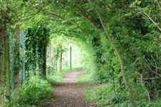 Free Vegetation, Nature Reserve, Woodland, Ecosystem Royalty Free Stock Photo - 131165625