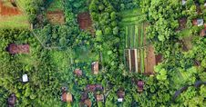 Free Bird S Eye View Photography Of Fields Surrounded With Trees Stock Image - 131201141