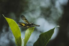 Free Selective Focus Photography Of Yellow And Black Skimmer Perched On Green Leaf Royalty Free Stock Photo - 131201325