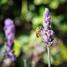 Free Macro Photography Of Bee On Flower Stock Photo - 131266480
