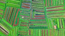 Free Aerial View Photography Of Field Royalty Free Stock Photos - 131330068