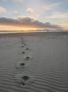 Free Foot Prints In Gray Sand Royalty Free Stock Photography - 131422737