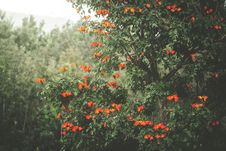 Free Photo Of Tree With Flowers Royalty Free Stock Photo - 131423055