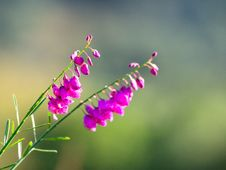 Free Pink Petaled Flowers In Bloom Selective Focus Photography Stock Images - 131518774