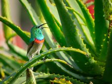 Free Green And Gray Bird Perching On Aloe Vera Plant Stock Image - 131613441