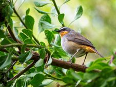 Free Selective Focus Photography Of Bird Perching On Branch Royalty Free Stock Image - 131613446