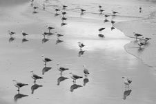 Free Grayscale Flock Of Birds On Beach Royalty Free Stock Photography - 131613697