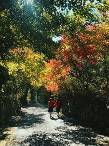 Free Two Women Walking On Pathway Beside Trees Royalty Free Stock Photography - 131613767