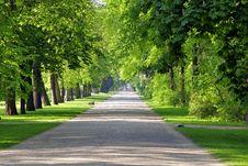 Free Path, Road, Nature, Tree Stock Photo - 131670560