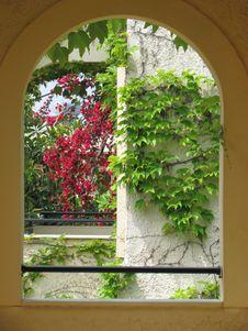 Free Flower, Plant, Window, Leaf Royalty Free Stock Photo - 131670645